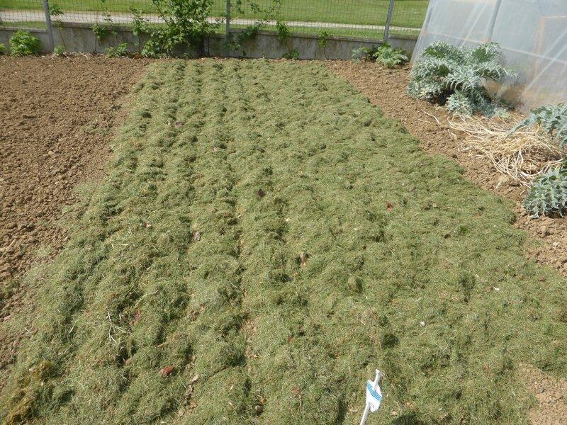22-plantation oignons (1)