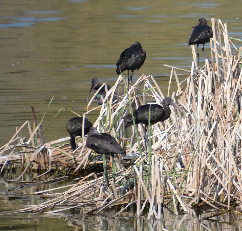 15 ibis 2