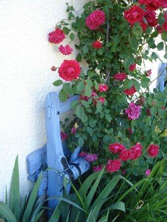 dét obj plantes (16)