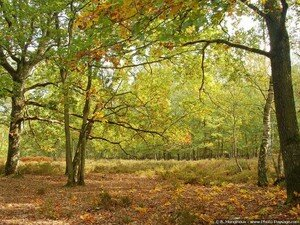 normal_automne_foret_rambouillet_chene