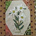 flowets flowers edelweiss