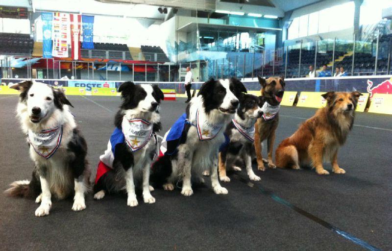 chiens de l'équipe