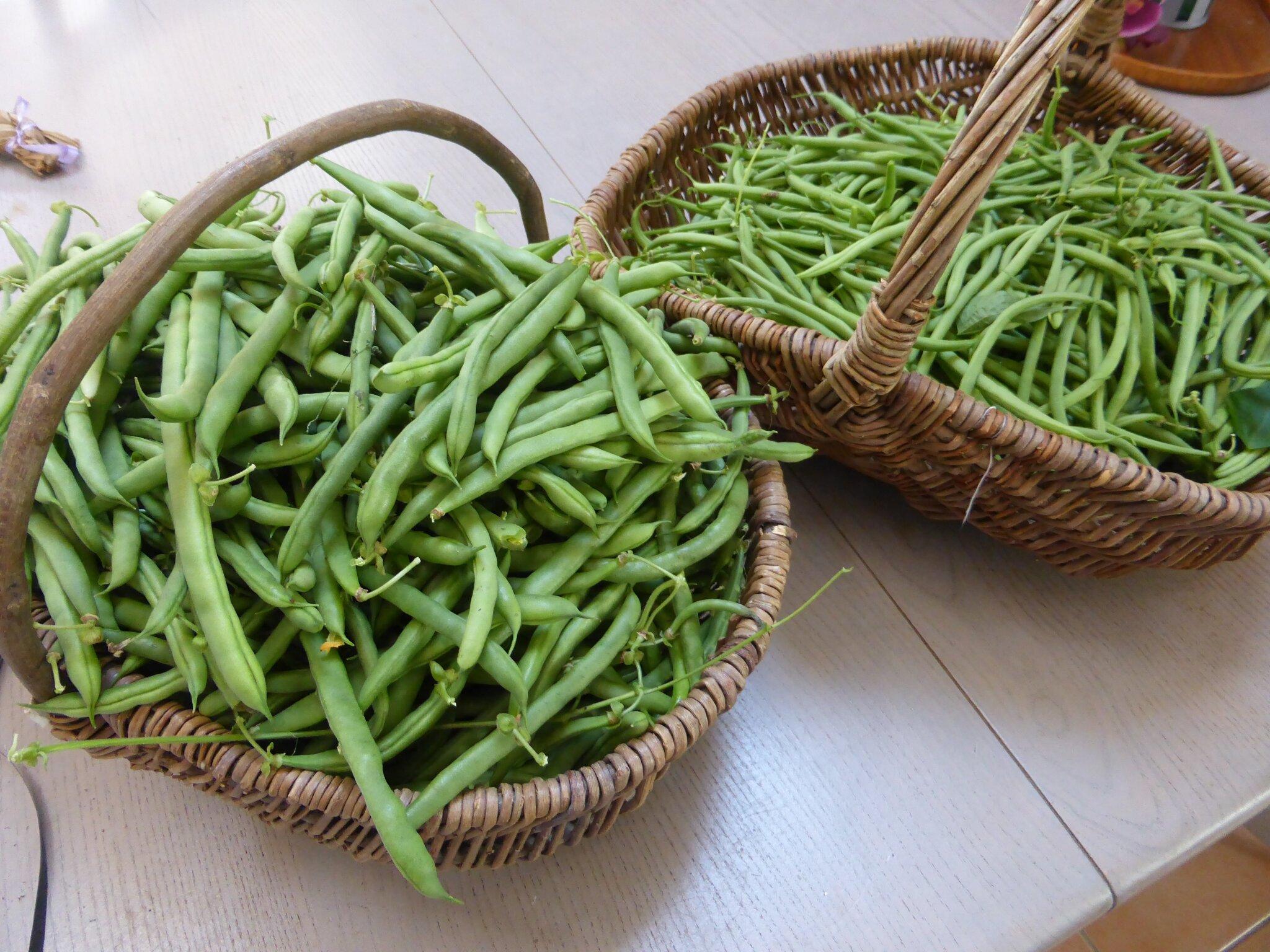 3-haricots verts (2)