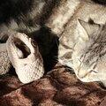 Histoires vraies : moi et mon chat