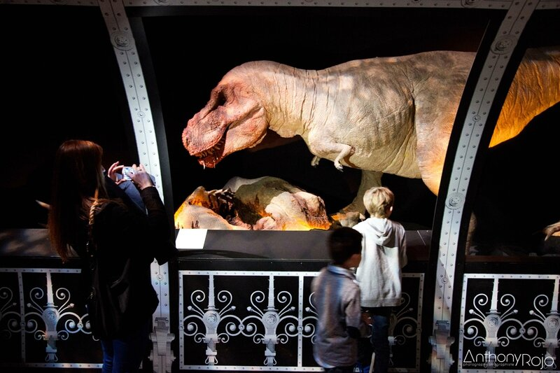 cap_sciences_t-rex_©_Anthony_Rojo-25 copie