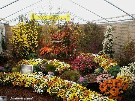 Chrysanthemes_15_Orleans