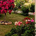 Windows-Live-Writer/jardin_D005/DSCF3884_thumb