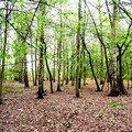 Forêt feuillue