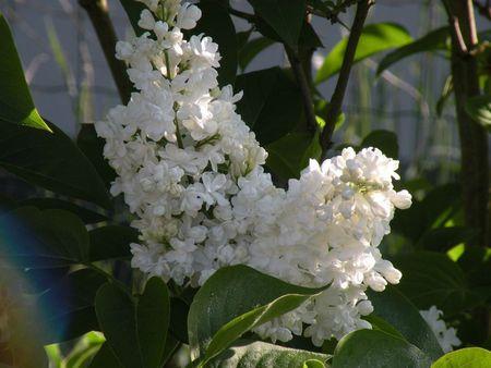 fleurs fête des mères 002
