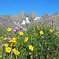 juillet-2006-bouquet-aiguilles-d-a-1