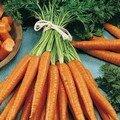 Et hop.... vive les carottes!