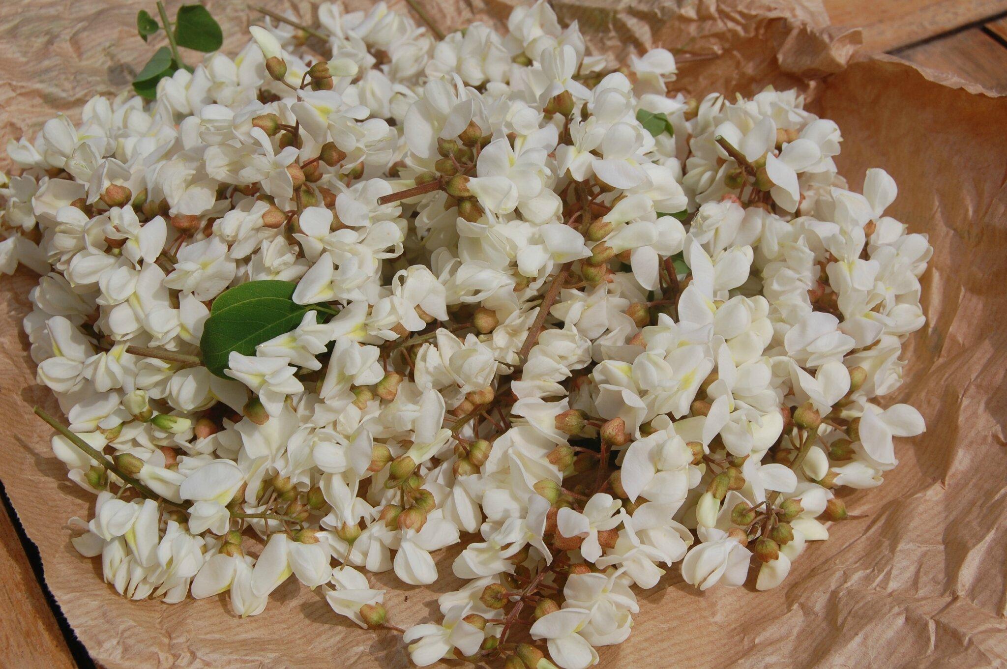 Découvrir le goût de la fleur d'acacia