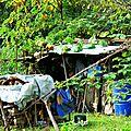 courgettes poussant sur la cabane