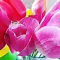 Fleurs à couper