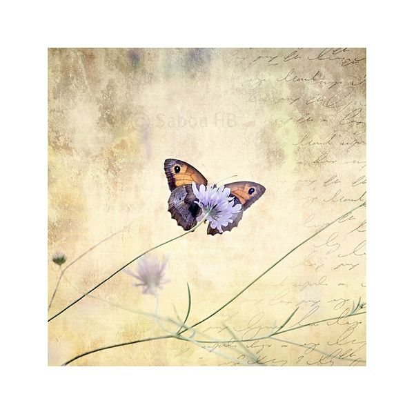 Papillon-blog-Etole-