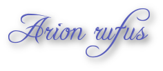 Arion rufus
