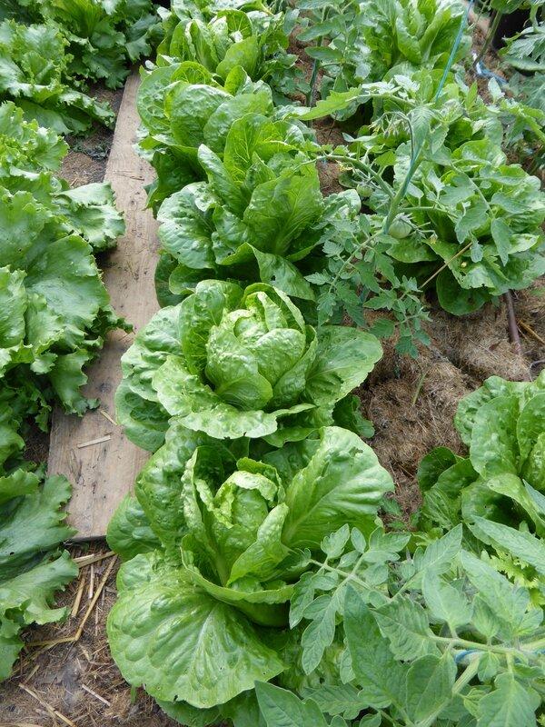 11-salades (1)