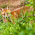 2014-05-30 LUX-1061