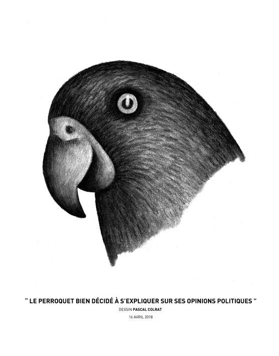 __le_perroquet_bien_de_cide__a__s_expliquer_sur_ses_opinions_politiques__