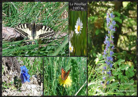 fleurs_du_p_rollier