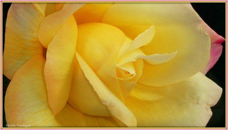 Coeur de rose 2705154