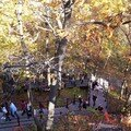 Mont royal 21oct 046