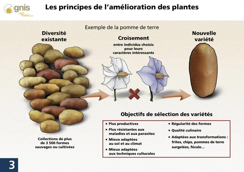 biotech-03---principe-amelioration