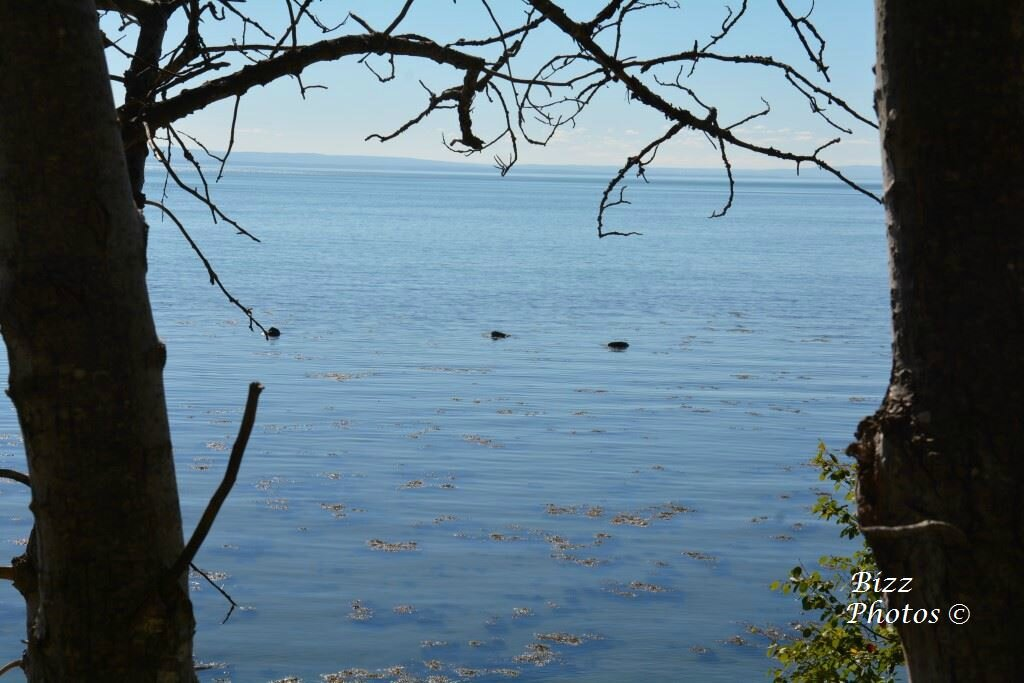 Bord du fleuve Cap a l'Aigle