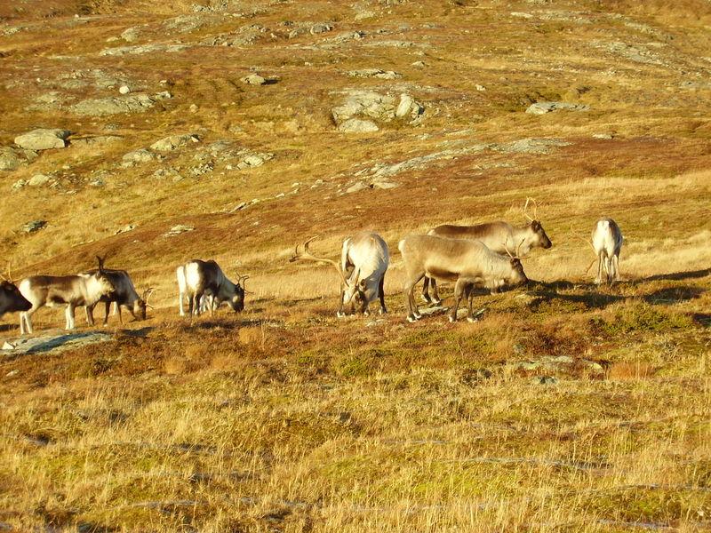 17-10-08 Sortie Montagne et rennes (135)