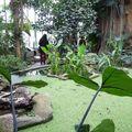 Grandes Serres Tropicaless (23)