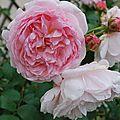Fleur au jardin 21 06 2012 115