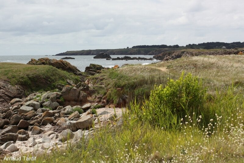 00666 Noirmoutier Juin 2020 - L'Ile d'Yeu - La Côte Sauvage de la Pointe des Corbeaux à la Plage des Vieilles