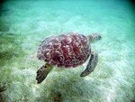 tortue_mayotte