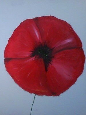 Coquelicot_ouvert