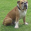 Anna famille d'accueil à flines lez raches (orchies-douai-valenciennes- villeneuve d'ascq-lille) garde votre chien en famille