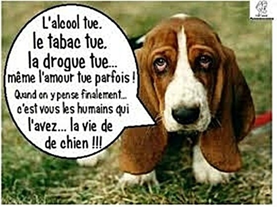 citation-chien