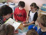 Atelier cuisine Les oignons