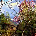 cabane magnolia