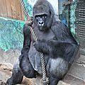 zoo beauval-12