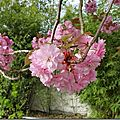 Windows-Live-Writer/Joli-printemps-au-jardin-_601C/20170402_102421_thumb