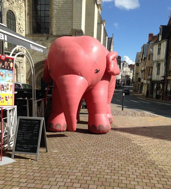 elephant_rose_