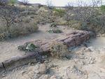 Twyfelfontein forêt 1