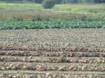 Saint Malo mer et bateaux et légumes bio st Méloir sept 2014 050