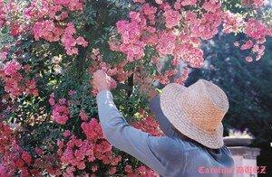 jardin_des_plantes_000192_copie