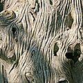 IMG_1139 Sculpture naturelle