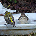 ♥ les oiseaux reviennent petit à petit au jardin du bonheur ♥