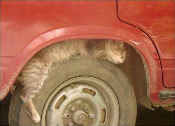 chat dormir pneu_001