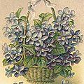 Panier de Violettes