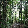 Forêt de palmitos
