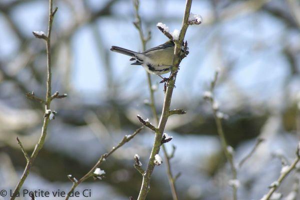 la_petite_vie_de_ci birds (2)